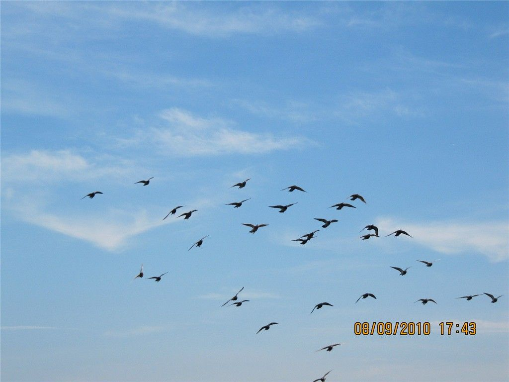 蓝天白云中的飞翔好美