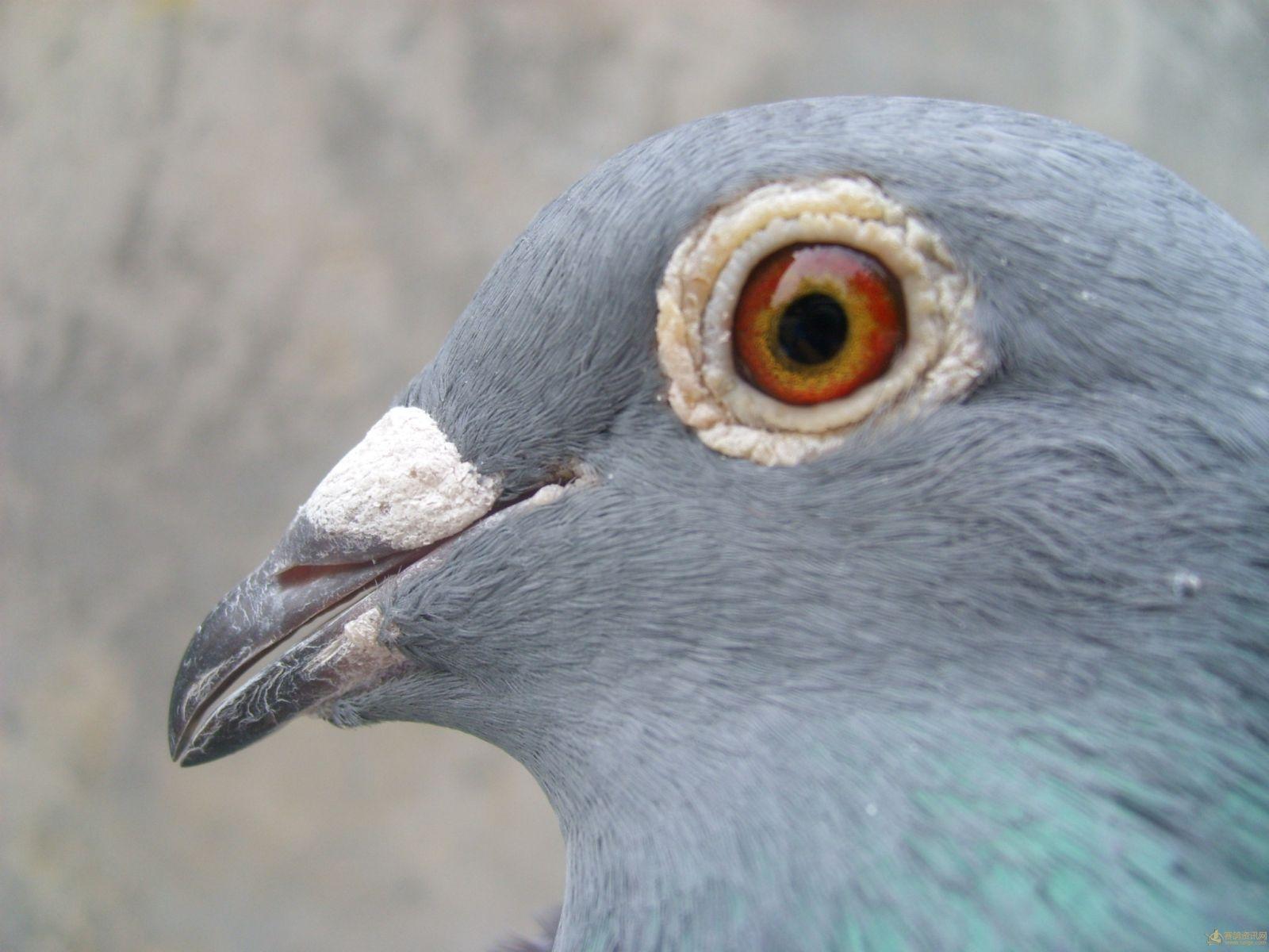 壁纸 动物 鸟 鸟类 1600_1200