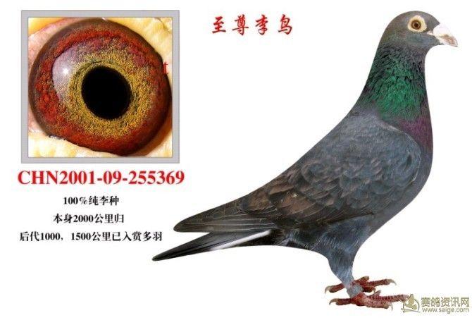 鸽1 相册 黑雨点图片
