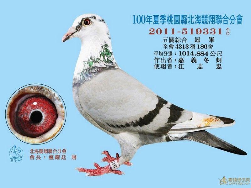 蚊子鸽鸽子鸟动物800_600鸟类关了门窗房间怎么飞进来图片