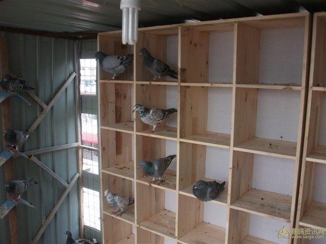 鸽棚设计图3米到5米