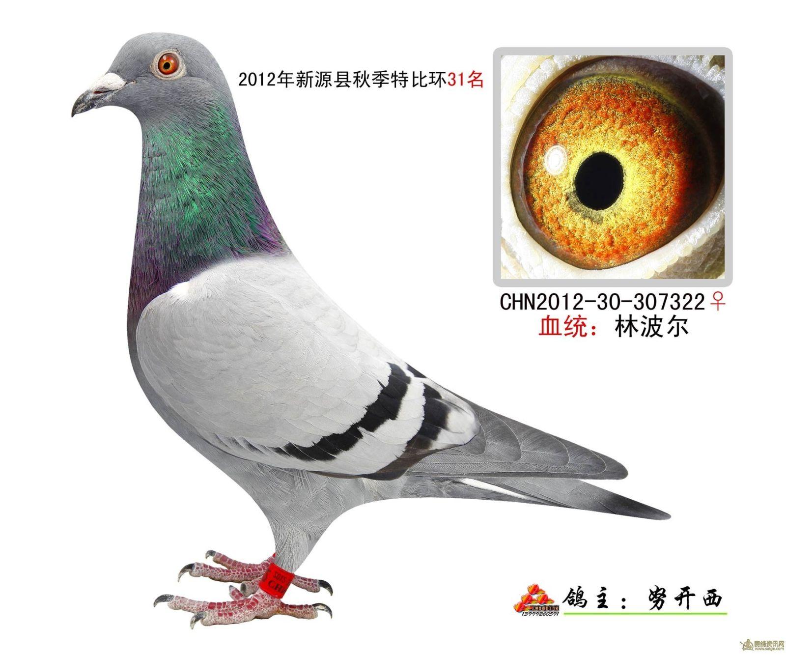 新疆新源县信鸽协会