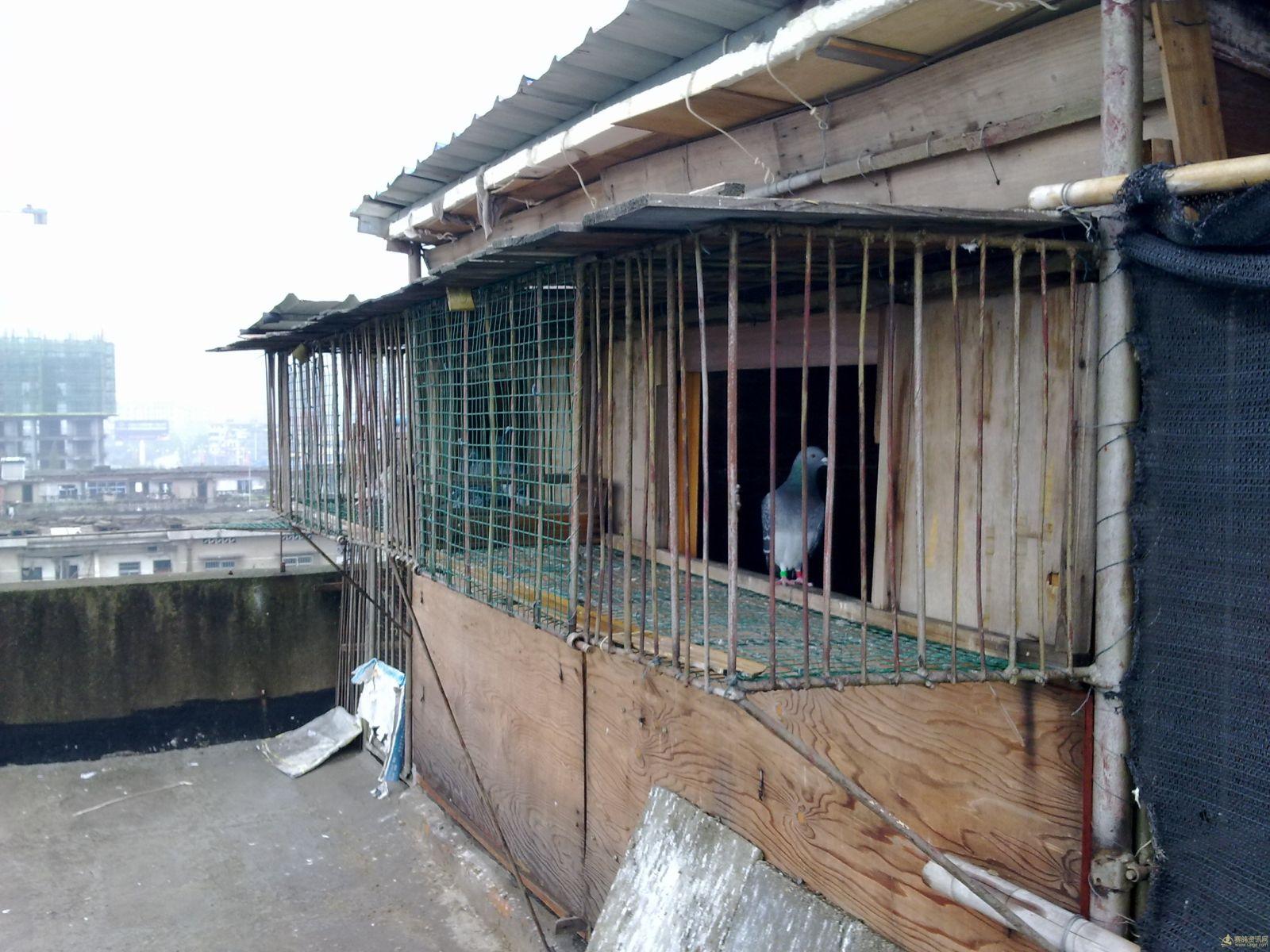 江西省上饶市信州区信鸽协会