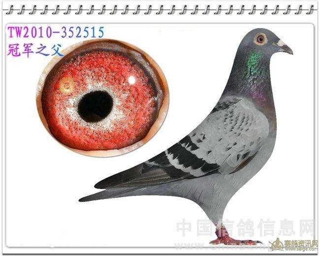 新疆拜城县信鸽协会
