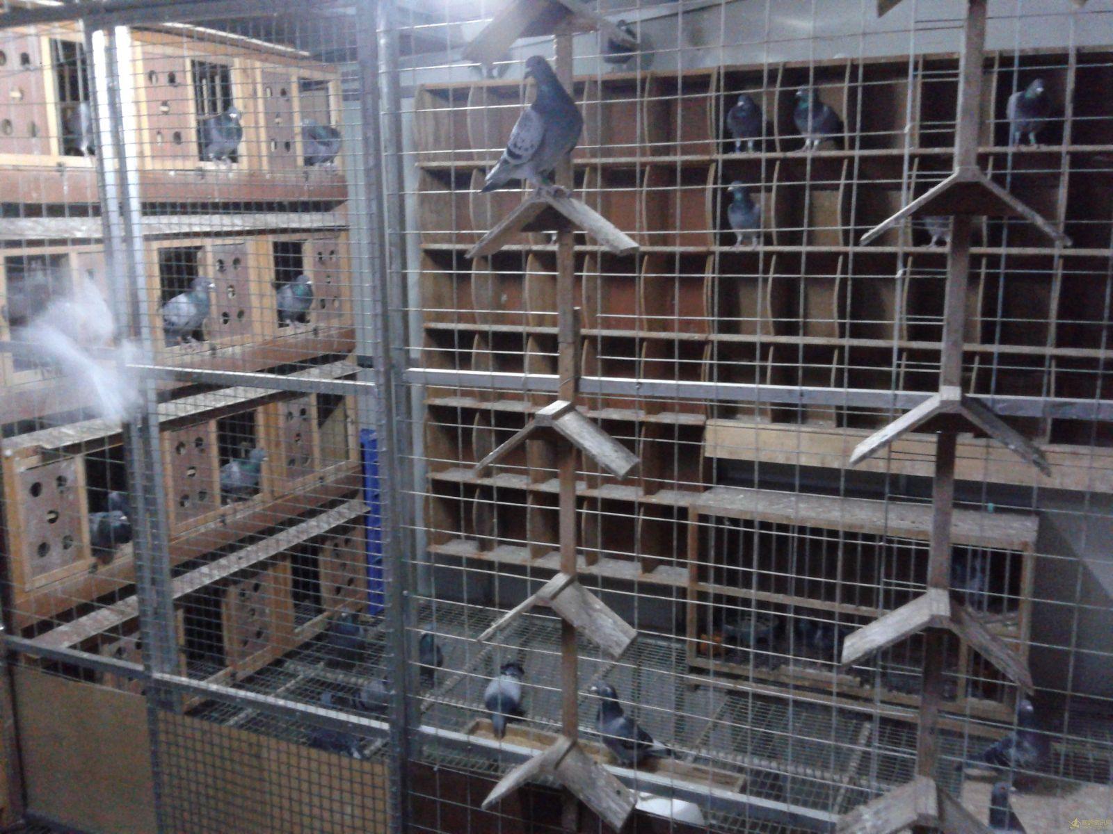 賽鴿籠子設計圖片