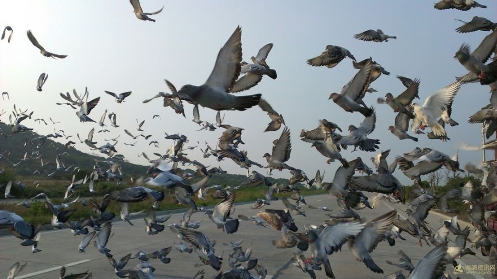 壁纸 动物 鸟 鸟类 1024_576