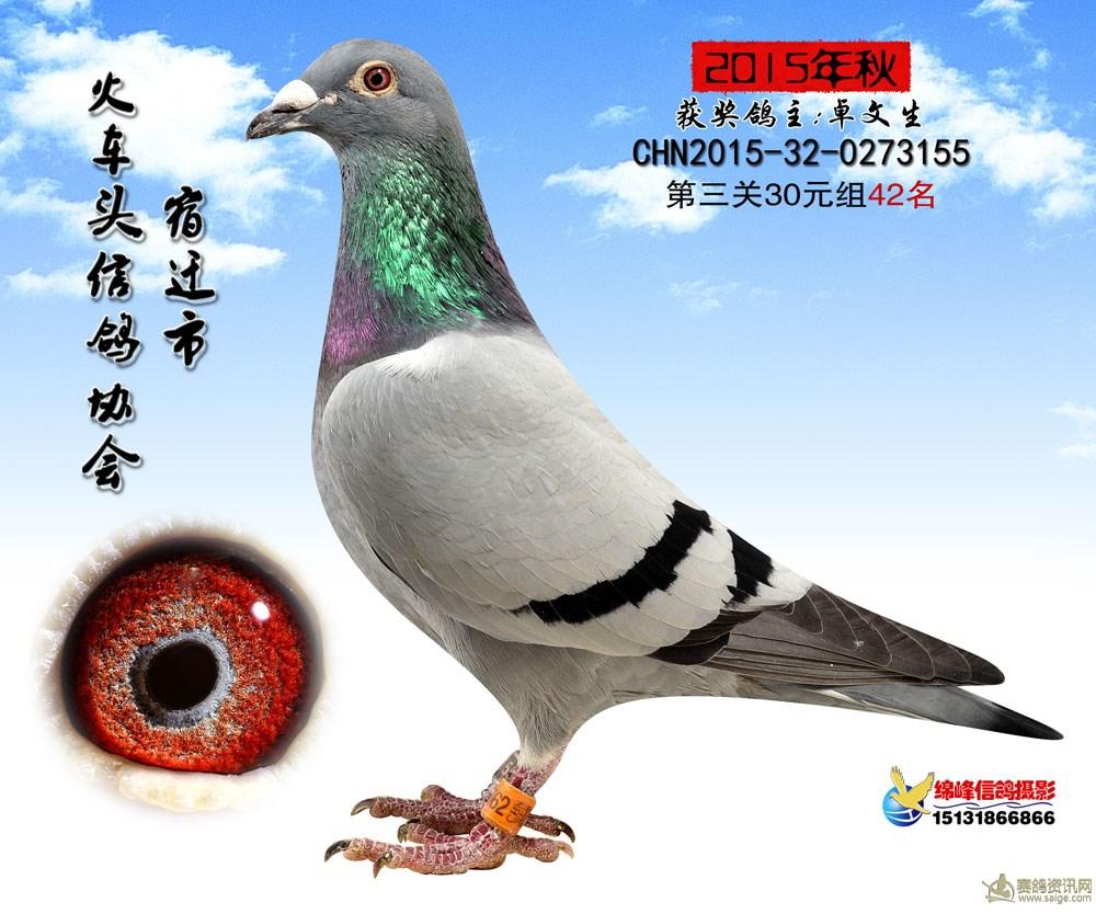 火车头42_相册_宿迁市火车头信鸽协会
