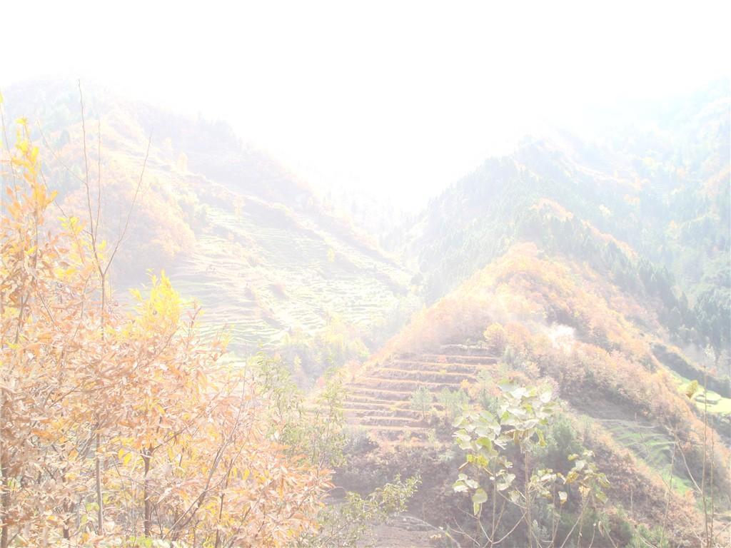 青川地震遗址