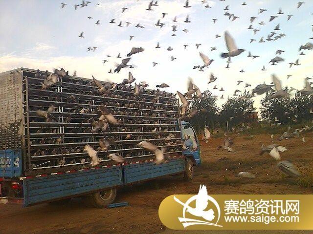 北京恒兴国际赛鸽公棚