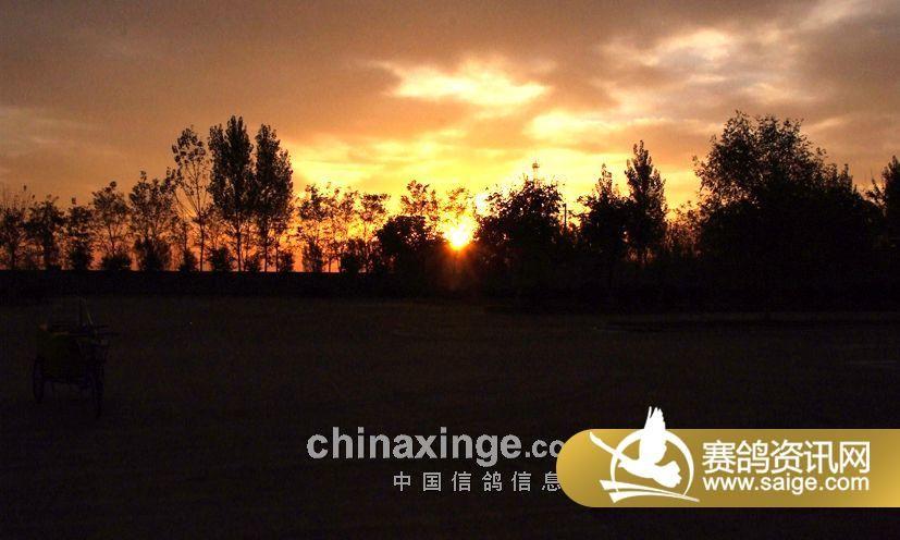 放飞地图片及冠军照片 公棚动态 北京宏润天泰竞翔信鸽公棚