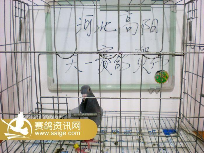 赛鸽笼子设计图片大全展示