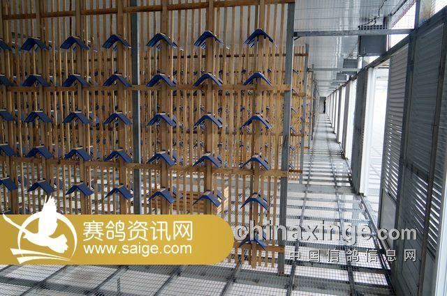 公棚内部的鸽舍结构,通深一百三十五米