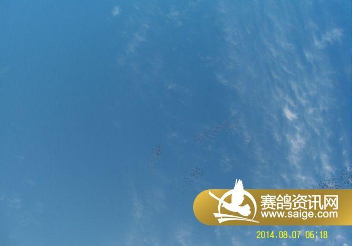 北京/北京群翔赛鸽公棚/我已经飞的够高(图)