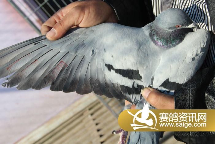 飞天动物动态免抠素材