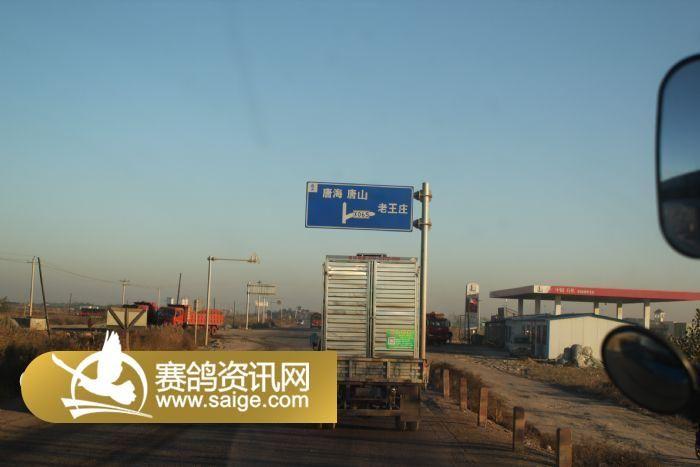 秦皇岛腾隆赛鸽俱乐部11月3日127公里收费站训放图片