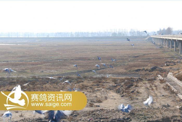 北京/北京群翔赛鸽公棚/2015赛季赛线100公里测试(图)