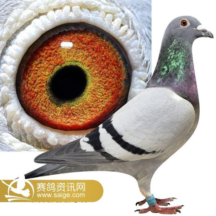 鸟类鸽教学动物图示鸟鸽子700_700北京3d恐龙科技馆图片