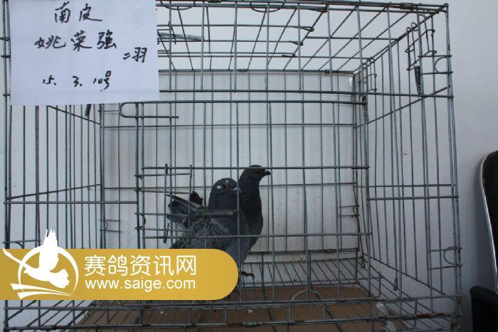 信鴿子籠子設計圖圖片
