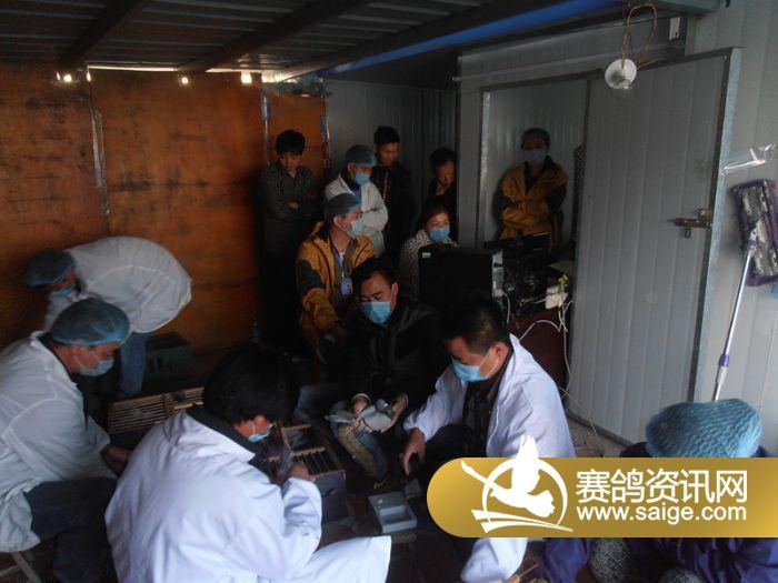 2015年安徽太平公棚预赛集鸽图片 公棚动态