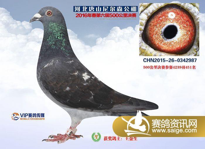 唐山尼尔森春棚500公里决赛426-453名获奖鸽照片