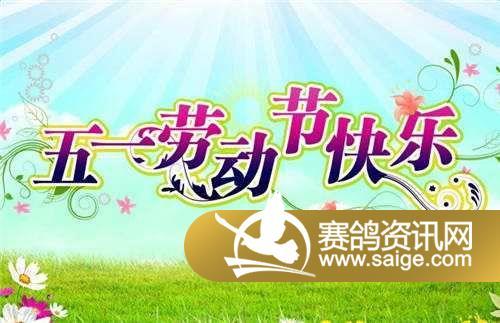 青岛文盛公棚祝全国鸽友五一节日快乐!