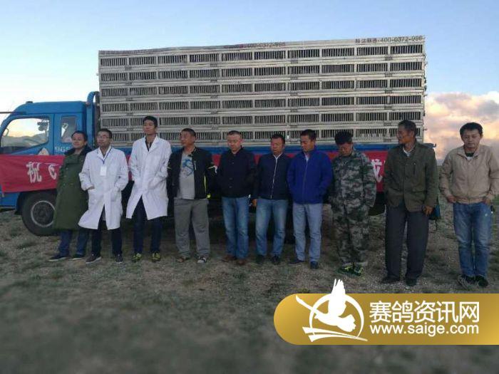 新疆飞天国际公棚 春棚 500公里决赛 开笼公告