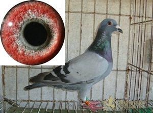 抓眼虫行骗_肠眼虫_眼虫病_捉眼虫_抓眼虫_东达新闻网