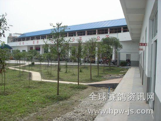 三鑫公棚赛鸽中心经扩建改造后的鸽舍全貌