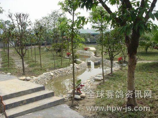 三鑫公棚赛鸽中心经扩建改造后的环境一角