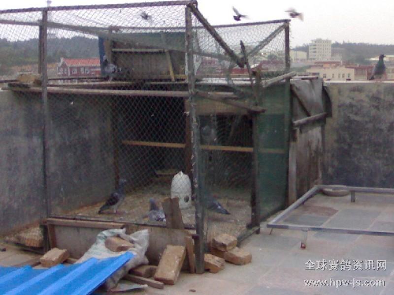 为07年秋赛冠军的鸽友建造鸽舍