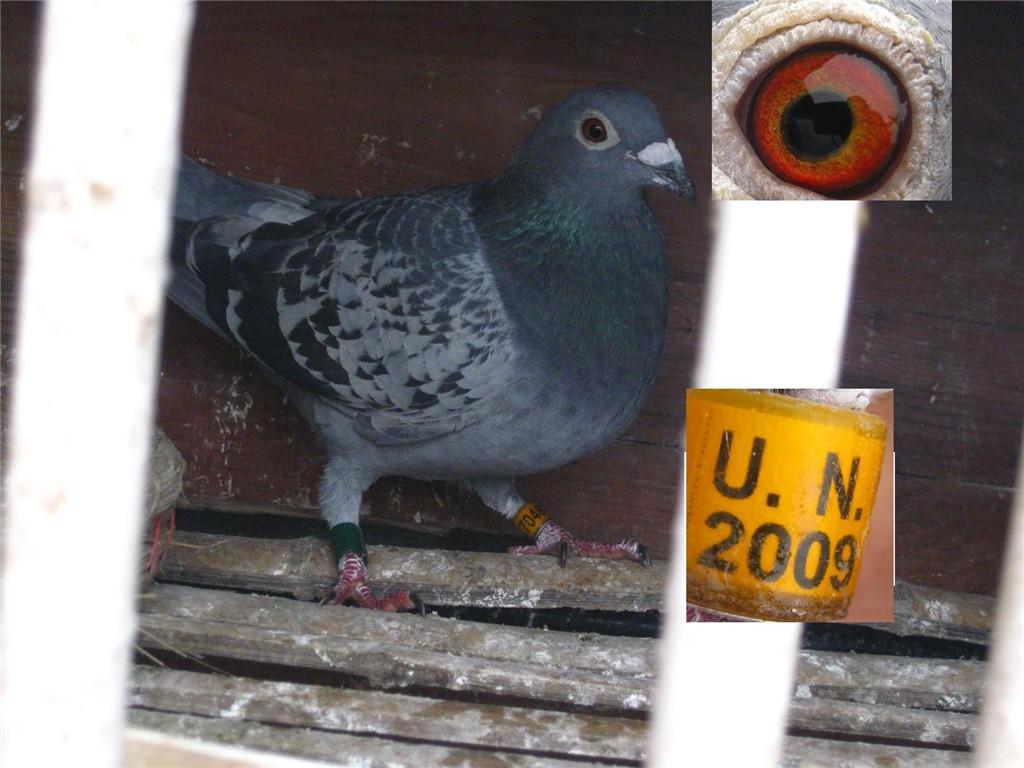 我家的信鸽-食品资讯-第一食品网_赛鸽资讯网