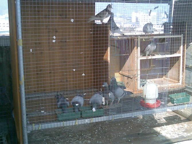 鸽笼设计图尺寸