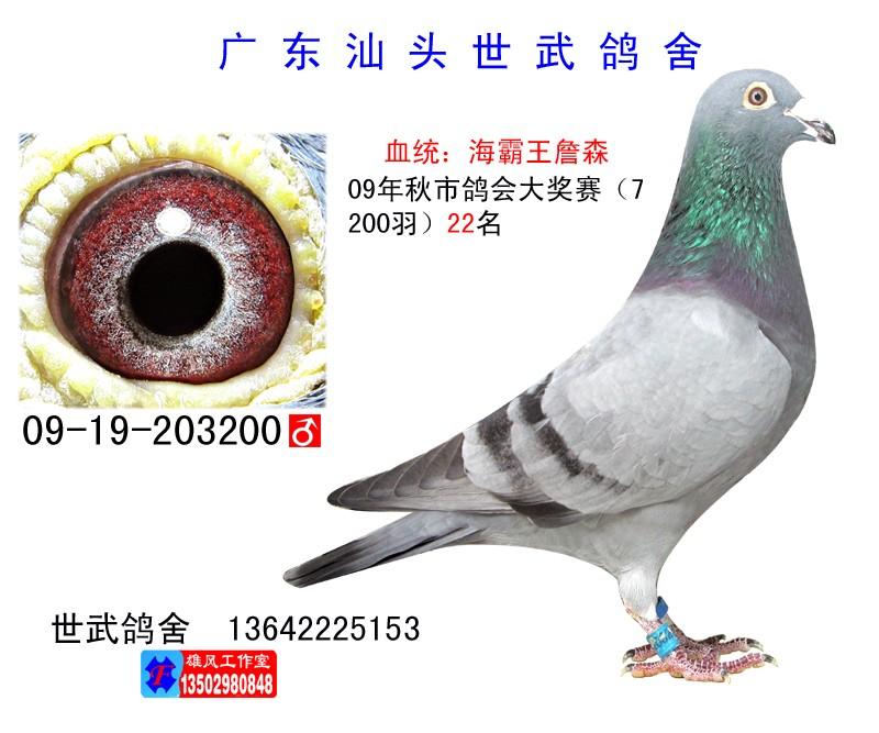 大奖赛22名 C09-203200 海霸王詹森