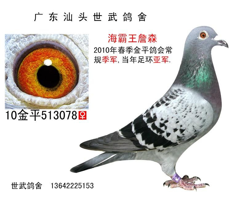 总季军 C10-513078 海霸王詹森