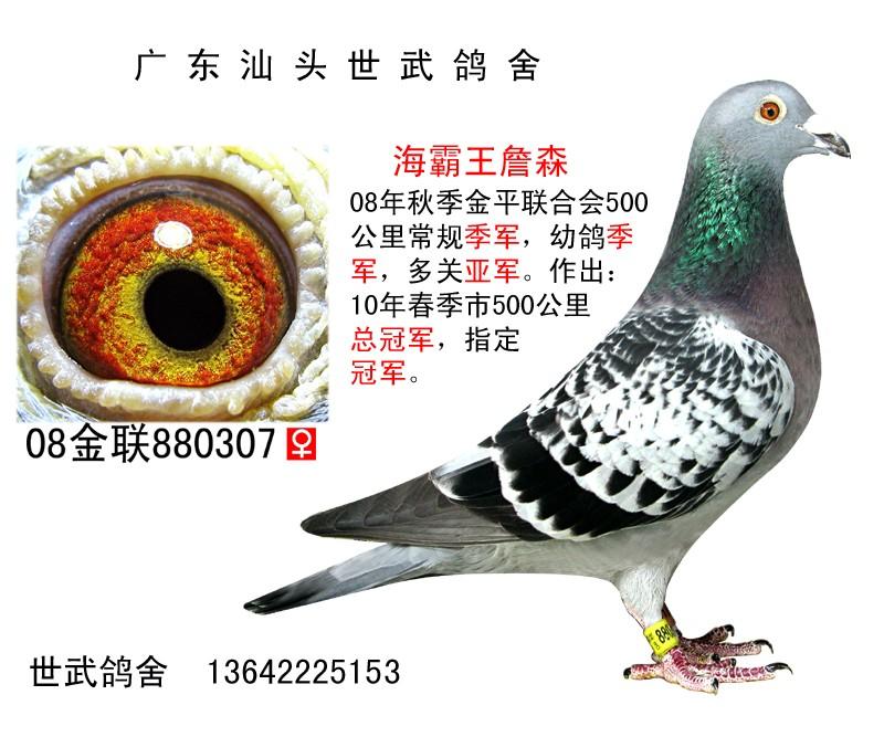 总季军 C08-880307 海霸王詹森