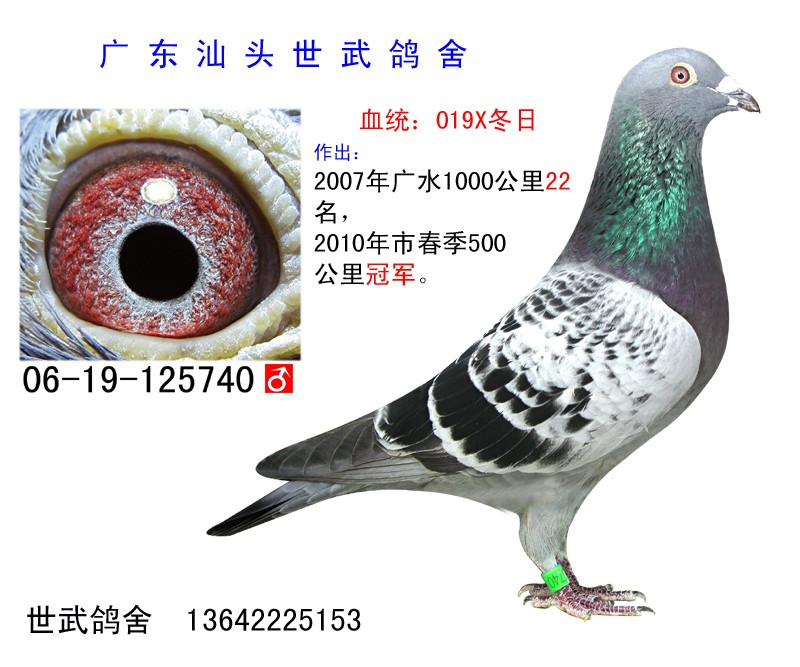 海霸王詹森 C06-125740