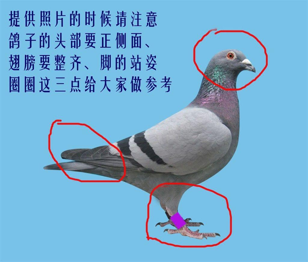 2021中国摩博会在渝举行亮相展车千余款_赛鸽资讯网