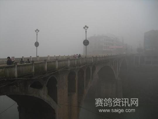 重庆铁路垫江信鸽协会2011年春训平昌站集鸽