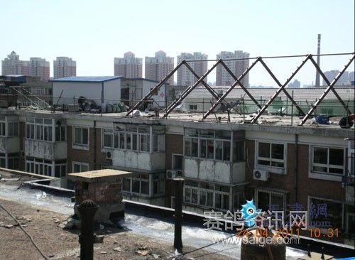 鸽子/屋顶私建的鸽子棚...
