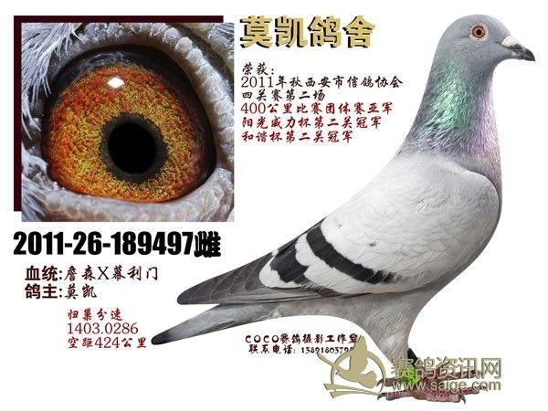鸽子眼睛的结构图