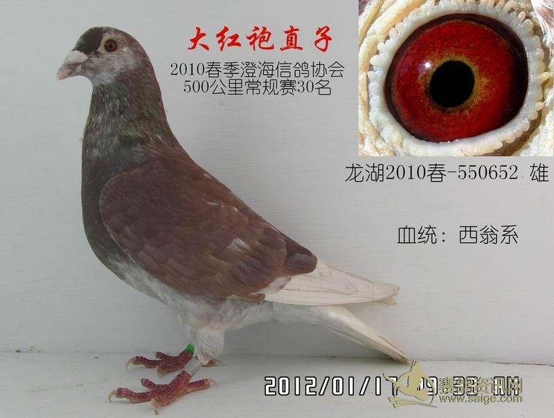 三营信鸽协会_