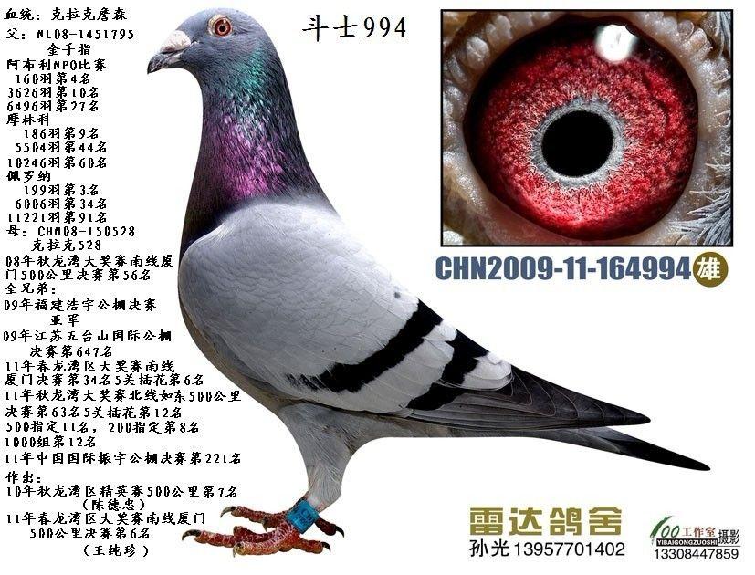 资讯囹�!_克拉克994_赛鸽资讯网商城