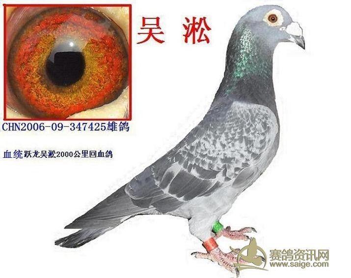 吴淞信鸽鸽眼图片大全 上海吴淞炮台湿地公园 吴淞口炮台湾湿地公园
