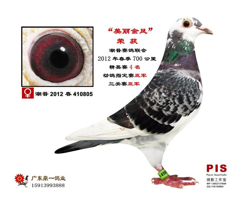 教学鸽鸽子苍蝇得到鸟动物900_751性药鸟类粉在哪里能买图示图片