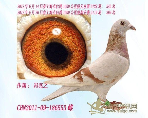 2012年6月14日春上海市信鸽1500公里级天水赛3729羽 545名