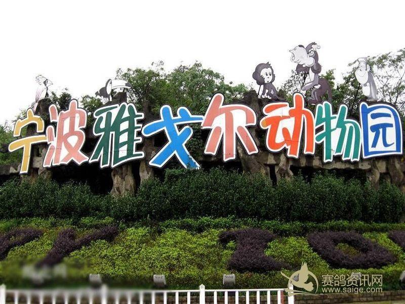 雅戈尔动物园中华名鸽苑后天开园 规模国内第一