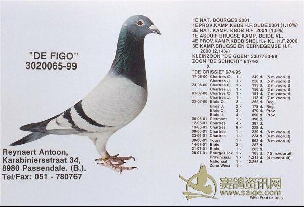 鸽子传递信息 矢量图