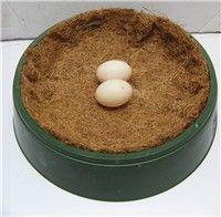 塑料蛋盆【优质塑料+毛棕垫】