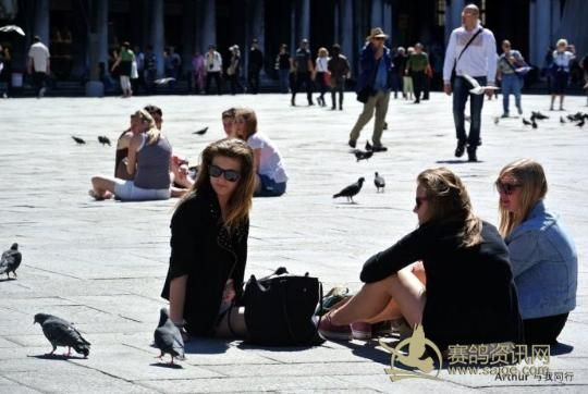 专欺负美女的威尼斯广场鸽