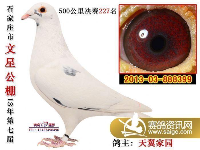 动物鸽海豚鸽子图示鸟教学700_525歌剧二鸟类音教学图片